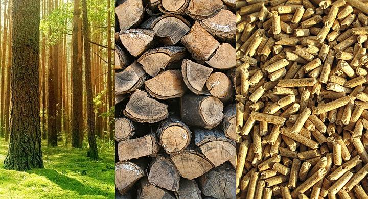 Como se produce la Biomasa en Barcelona