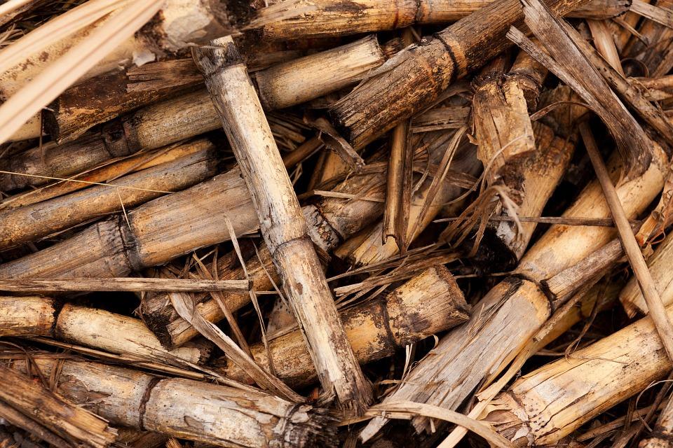 Uso de energías renovables en tu casa de Cerdanyola: Biomasa