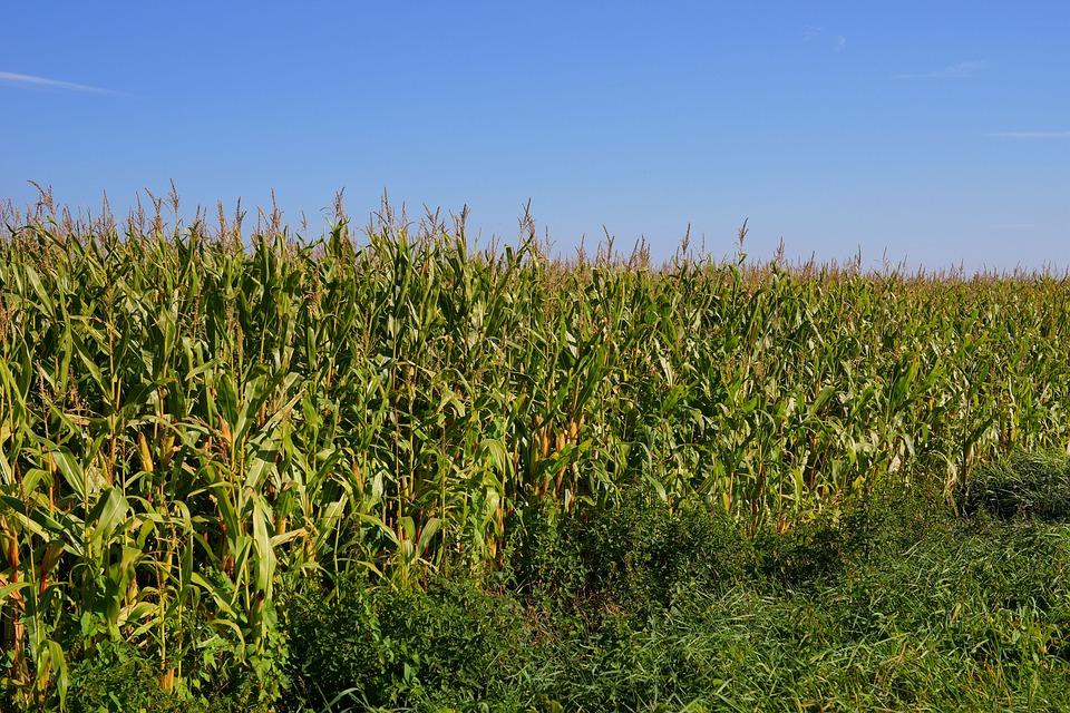 Los procesos de transformación de la biomasa