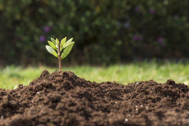 ¿Qué es la biomasa y cuáles son sus funciones?