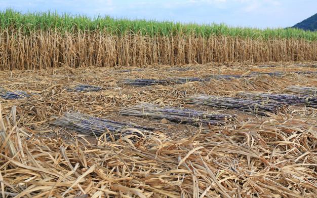 ¿Por qué escoger biomasa en Terrassa?