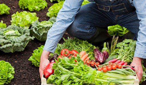 La agricultura ecológica crea armonía